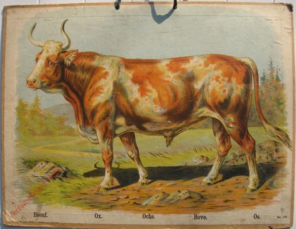 758 - Boeuf, Ox, Ochs, Bove, Os